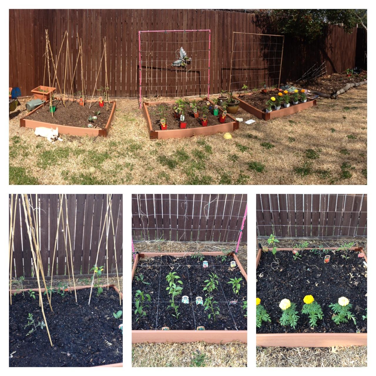 garden2-21